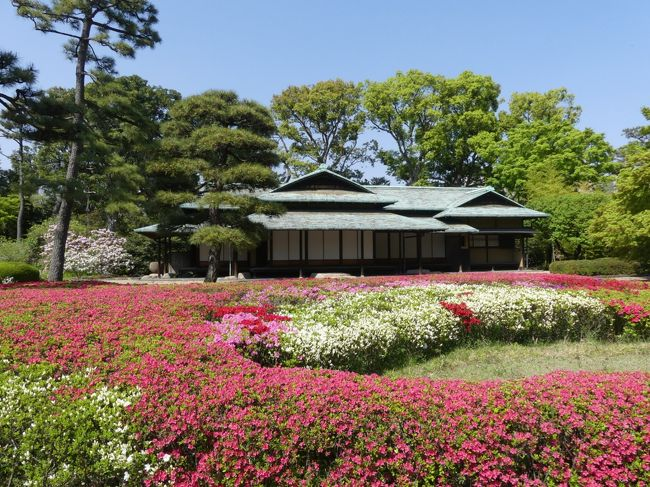 皇居東御苑へサクラを見に行きました。竹下門から入り、雑木林から日本庭園を通って、大手門まで歩きました。遅咲きのサクラが残っていましたが、既にツツジが綺麗に咲き始めていました。見頃は近そうです。