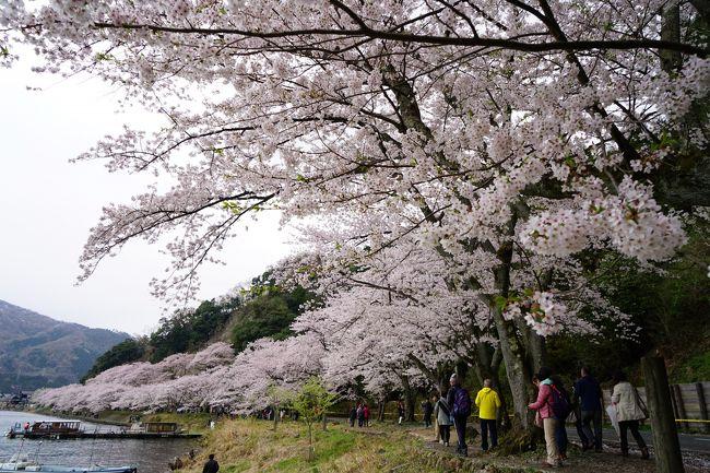 JR全線乗り放題の青春18きっぷ。本当の青春時代にやっていた1日中ひたすら乗る旅は、今となってはちょっときついかなぁ。でも、好奇心と喰い気は若いころより旺盛かも。だから乗るより降りる旅。<br /><br />今回は鉄道で琵琶湖を一周する旅。滋賀県は何度も通ったことがありますが、宿泊して観光するのは初めてかも。桜の名所に古い町並み、新鮮な琵琶湖の幸に日本で唯一淡水湖にある有人島。1泊2日の短い旅ですが、旅行記は3編にわたる長編になってしまいました。<br /><br />【旅程】<br />○2018年4月7日(土)<br />岡山駅6:14(山陽本線)7:47姫路駅8:09(山陽本線・東海道本線・湖西線)10:51マキノ駅12:51(湖西線)13:01近江塩津駅13:05(北陸本線)13:14木ノ本駅15:14(北陸本線)15:28長浜駅<宿泊>三谷旅館<br />・4月8日(日)<br />長浜駅8:29(北陸本線)8:38米原駅9:00(東海道本線)9:26近江八幡駅9:40(近江鉄道バス)10:12堀切港(おきしま通船)沖島(沖島通船)堀切港16:29(近江鉄道バス)17:09近江八幡駅17:24(東海道本線)17:31野洲駅17:58(東海道本線・山陽本線)20:04姫路駅20:36(山陽本線)22:03岡山駅<br /><br />【乗車メモ】<br />○列車乗車距離 617.3km(2日間)<br />○青春18きっぷお得額 普通運賃10,150円−2日分4,740円=5,410円