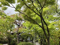 桜ちり青葉揺らめく東山