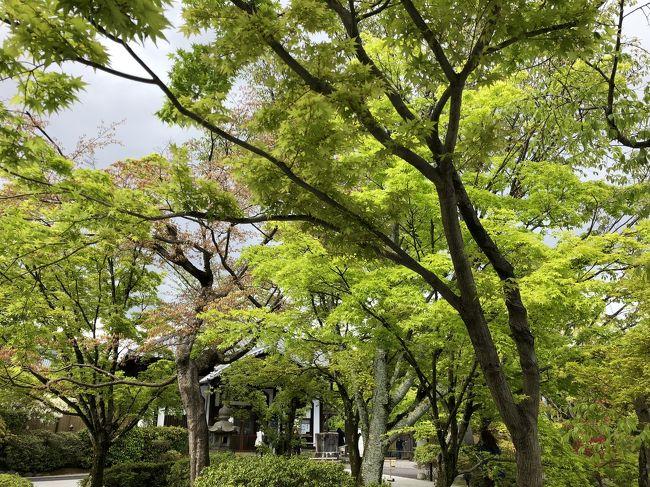 今年は桜が思いのほか早くすぎました。<br />京都の桜の名所でもある東山インクラインの桜の木もしっかり青葉です。<br />  その近く、東山ドライブウェイに入って将軍塚に行ってみました。<br /><br /> ドライブウェイとは言え、山頂までそれ程距離もなく、5分以内で着いてしまいます。<br />  山頂には無料駐車場があり、私達が到着した時はほぼ満車状態、外国の旅行者の観光バスも2台ありました。