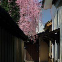 長野 桜めぐり~田中本家博物館、普願寺、長妙寺、延命地蔵堂の桜