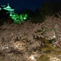 春爛漫の名古屋&岡崎を巡る旅【3】 〜闇夜に浮かび上がるさくら色の幽玄の世界 「岡崎公園」夜桜見物へ♪〜