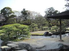女子中学生の娘2人と岡山 倉敷&後楽園で桜見♪。