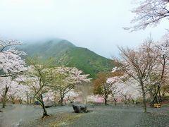 静岡遠州へ その1 その前に静岡市葵区の梅ヶ島コンヤ温泉で花見。