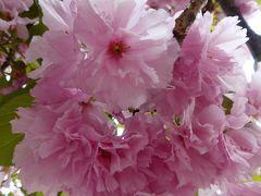 京都と大阪へ 鉄道&ドライブ旅 ~後編 世界最大の無印良品と桜の通り抜け~