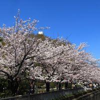 中目黒、仙台堀川公園、日比谷、六本木 お花見と街歩き