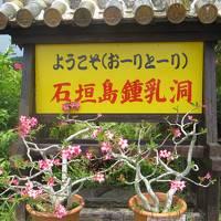 西表島仲間川クルーズと由布島の牛車!のんびりした風景と、石垣島の岬の絶景を求めて、ドライブの旅!
