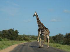 南アフリカ3週間 ドライブ旅行記  17  1日中サファリをしてみた。