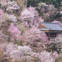 春の奈良へ_1. 吉野山の桜