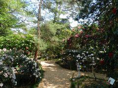 『村田製作所八日市事業所』のシャクナゲ園◆無料ですが素晴らしかったです!