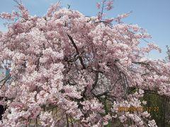 勝幡から六輪までのハイキング(下水道科学館あいち、桜ネックレス、明治なるほどファクトリー)