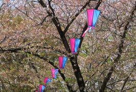 2018春、長野の百名城巡り(2/25):4月16日(2):小諸城(2):散った染井吉野、八重紅枝垂れ桜、南の丸、堀切