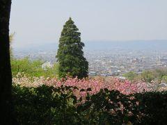 2018春、関西の花のお寺巡り(2/16):4月10日(2):百毫寺(2):本堂、関西花の寺18番、五色椿、奈良の眺望