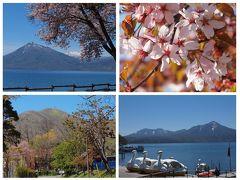 残雪の山をバックに咲く北海道の桜