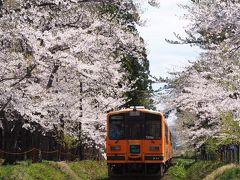 シルバーフェリーで行く青森桜めぐり(桜のトンネル芦野公園)