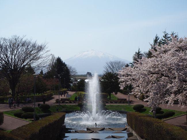 津軽フリーパスの適用範囲にもなっている<br />弘南鉄道沿線の桜スポットを巡ってきました<br /><br />ウェザーニュースの桜スポットに載っていない公園でしたが<br />黒石市の東公園、平川市の猿賀公園共に綺麗な桜が楽しめました