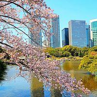 浜離宮恩賜庭園2/3 サクラ・モモ・・花盛りの春 ☆暖かい日差しを受け