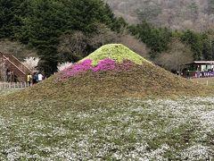 河口湖一泊&富士芝桜はちょい早かった