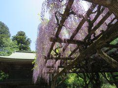 新緑の多福寺を二週間ぶりに訪問する