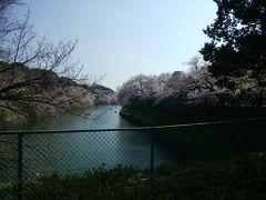 晴天の桜日より、夜桜スポット
