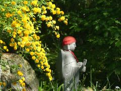 常楽寺の春の花_2018_いろいろな花がすこしずつ咲いています。(群馬県・太田市)