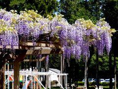 【近郊39】毎年1回の江南へー埼玉県農林公園 咲楽屋のでかうどん!