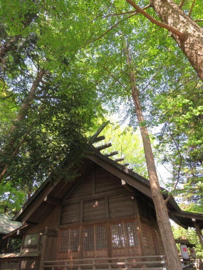4月21日、午後1時過ぎに多聞院の隣にある神明社を訪問しました。 正月にはかなりの初詣客が参ってかなり賑わうところですが、その他の時はとても静かなところです。 この日は月の原・花の小径を歩いた後に訪問しました。 神明社の後ろには大きな銀杏の木があり新緑で輝いていました。参道の両脇にも大きな木があり、木陰が出来ていてベンチで涼しく過ごすことが出来ました。<br /><br /><br />*写真は新緑に覆われた神明社