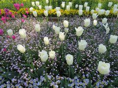 日比谷花壇 大船フラワーセンター (その1)花壇のようす