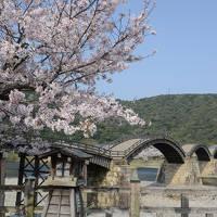 「さくら名所100選」を訪ねる花見ドライブ・その2<岩国市・錦帯橋>
