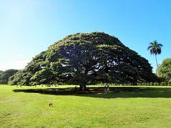 ハワイでリゾートウェディング(その4)《オアフ島一周ツアー(前編)》