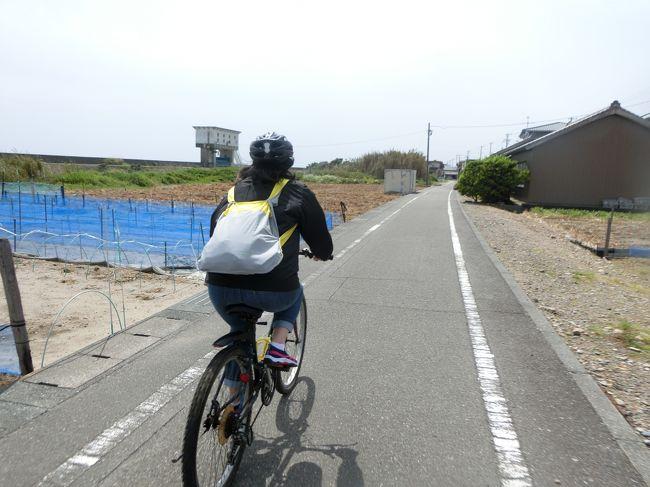 太平洋岸自転車道をマウンテンバイクで走ります。<br />計画では、静波海岸から御前崎まで片道19km 往復38kmのサイクリングです。<br />でもこの日は物凄い強風が吹いていました。<br />それも向かい風。<br />漕いでも漕いでも進まなくて、、、、、<br />牧之原資料館に寄ったんですが、ここがまた田沼意次に関する資料や展示が豊富で、予定より大幅に時間がかかってしまいました。<br />よって昼食は予定を変更してここ牧之原でお寿司!!<br /><br />田沼意次の印象が少し変わりました。