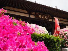 ツツジが真っ盛りの法雲寺へ