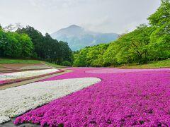 日帰り旅 西武秩父 羊山公園「芝桜の丘」