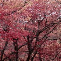 みなみ東北の桜を訪ねて3泊4日の旅 7-3 (花見山公園編)