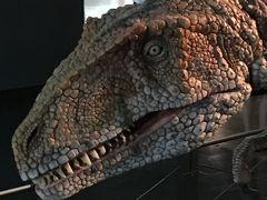 恐竜博物館と福井名物を食す。