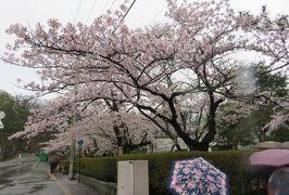 2018春、東北北部の名城巡り(1/28):4月24日(1):久保田城(1):名古屋から東京経由で秋田へ、雨の染井吉野