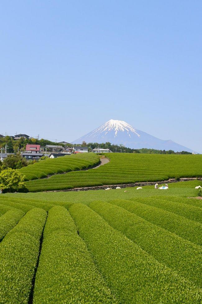 法事のための一時帰国で富士滞在。