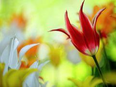 フォトジェニックな 「なばなの里」 花の饗宴