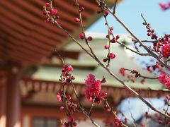 京都の梅と雛街道、そして猫カフェへ