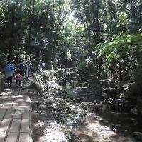 等々力渓谷で木々の中の散策を味わい二子玉川まで歩いた
