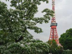 芝公園、増上寺、東京タワーから根津神社のつつじまで