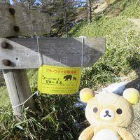 東京最高峰でクリスマスして来るクマ。