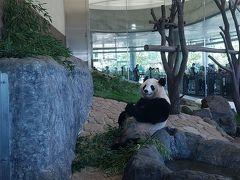 パンダに会ってきました。