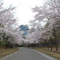 北海道2泊3日一人旅① 中島公園の桜と札幌パークホテル