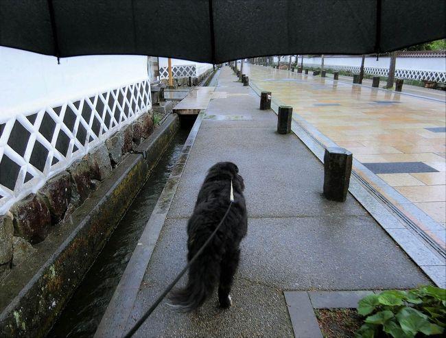 鳥取 市 天気 予報