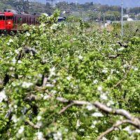 りんごの花が咲き広がるりんご畑の中を走るりんご列車を見にしなの鉄道に訪れてみた