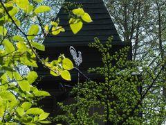 若草色の避暑地の休日☆春の軽井沢〈1〉黄緑色の世界