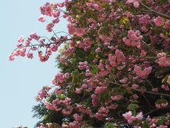 甲山八幡宮 甲山寺さんから鳥居が見えた! 無人で寂しい。徳川家ゆかりの神社さん
