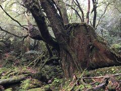 初めての鹿児島・屋久島旅3日目前半~苔むす森は森の美術館~