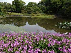 2017年5月 東京3日目 その1 皇居東御苑の散歩 コウホネ・ヒメコウホネ・バラが咲いています。